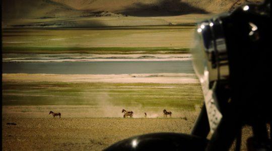 Royal enfield et Kyang au lac Tsokar - Voyage à moto Transhimalayenne et Ladakh, Inde, Himalaya