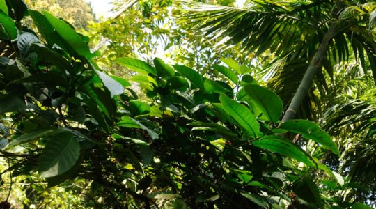 road-trip-moto-voyage-inde-sud-royal-enfield-kerala-karnataka-tamil-nadu- (7)