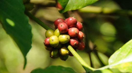 road-trip-moto-voyage-inde-sud-royal-enfield-kerala-karnataka-tamil-nadu-cafe