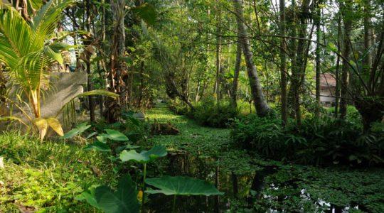 road-trip-moto-voyage-inde-sud-royal-enfield-kerala-karnataka-tamil-nadu-cannaux