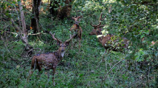 road-trip-moto-voyage-inde-sud-royal-enfield-kerala-karnataka-tamil-nadu-cerfs