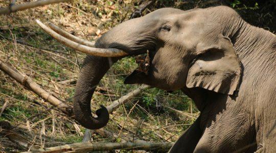 road-trip-moto-voyage-inde-sud-royal-enfield-kerala-karnataka-tamil-nadu-elephant