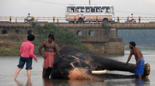road-trip-moto-voyage-inde-sud-royal-enfield-kerala-karnataka-tamil-nadu-elephant-bus
