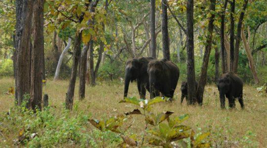 road-trip-moto-voyage-inde-sud-royal-enfield-kerala-karnataka-tamil-nadu-elephant-foret