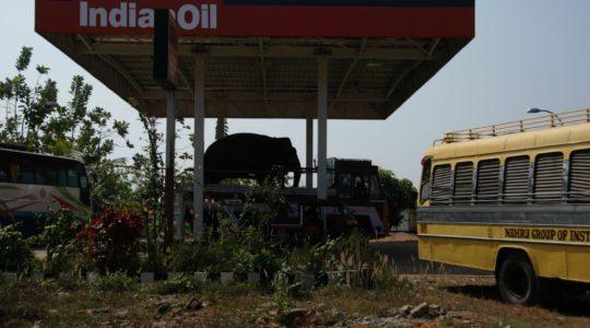 road-trip-moto-voyage-inde-sud-royal-enfield-kerala-karnataka-tamil-nadu-elephant-pompe-essence
