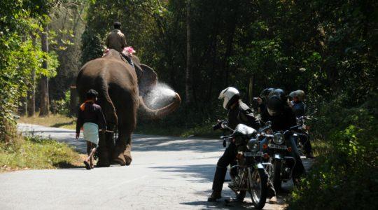 road-trip-moto-voyage-inde-sud-royal-enfield-kerala-karnataka-tamil-nadu-elephant-route