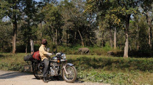 road-trip-moto-voyage-inde-sud-royal-enfield-kerala-karnataka-tamil-nadu-elephants