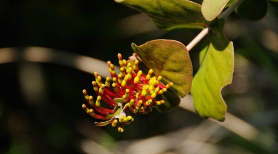 road-trip-moto-voyage-inde-sud-royal-enfield-kerala-karnataka-tamil-nadu-fleur (2)
