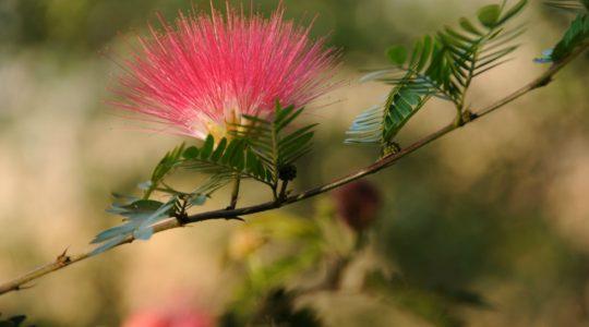 road-trip-moto-voyage-inde-sud-royal-enfield-kerala-karnataka-tamil-nadu-fleur
