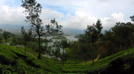 road-trip-moto-voyage-inde-sud-royal-enfield-kerala-karnataka-tamil-nadu-panorama-plantation-the