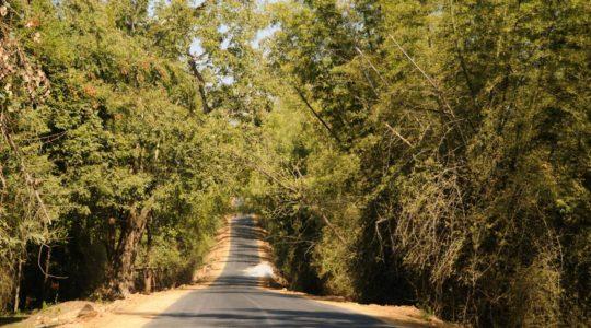 road-trip-moto-voyage-inde-sud-royal-enfield-kerala-karnataka-tamil-nadu-route (3)